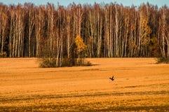 Осень в центральной России стоковое изображение rf