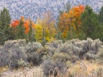 Осень в шалфее Стоковая Фотография