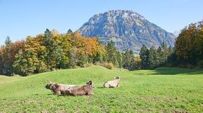 Осень в alps Стоковые Изображения