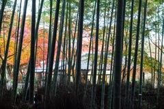 Осень в Arashiyama, Киото, Японии Стоковая Фотография RF
