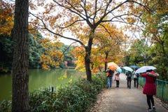 Осень в Arashiyama, Киото, Японии Стоковое Изображение RF