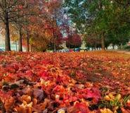 Осень в Betanzos стоковая фотография