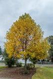 Осень в Burien 4 Стоковое Изображение RF