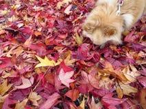 Осень в colores Стоковые Изображения