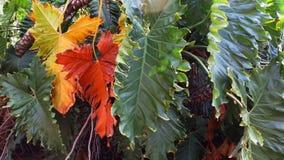 Осень в colores Стоковые Изображения RF