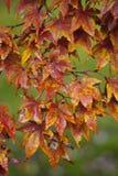 Осень в Commack Стоковая Фотография