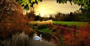 Осень в Hampstead Лондоне Великобритании Стоковые Изображения