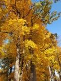 Осень в Sigulda, Латвии стоковое фото rf
