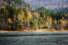 Осень в taiga Стоковое Фото