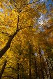 Осень в Umbra Foresta, Gargano, Apulia, Италия стоковая фотография