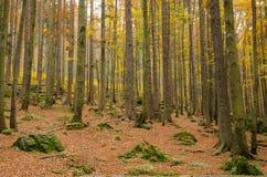Осень Германия, баварский лес Стоковое Фото