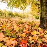 Осень дерева и листьев Стоковые Изображения RF