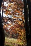 Осень деревьев Стоковые Изображения