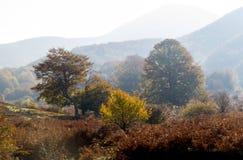 Осень деревьев Стоковое Изображение RF