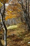 Осень деревьев Стоковые Изображения RF