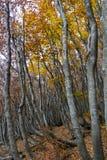 Осень деревьев Стоковое Изображение