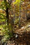 Осень деревьев Стоковое фото RF