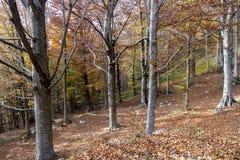 Осень деревьев Coolorful Стоковые Изображения