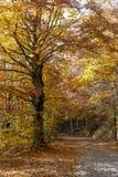 Осень деревьев Coolorful Стоковое Изображение RF