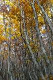 Осень деревьев Coolorful Стоковая Фотография