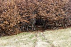 Осень деревьев Coolorful Стоковая Фотография RF