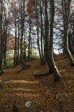 Осень деревьев Coolorful Стоковое фото RF