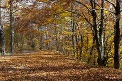 Осень деревьев Coolorful Стоковое Изображение