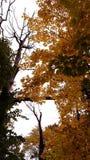 Осень Деревья Серии ветвей с желтыми листьями Стоковое фото RF