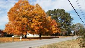 Осень Деревья Стоковое Фото