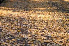 Осень, дорога листьев зашкурит банки Стоковая Фотография