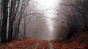 Осень, лес, туман, изумляя Стоковое Изображение