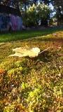 Осень Желтый кленовый лист Стоковое фото RF