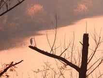 Осень заболоченного места Стоковое Изображение