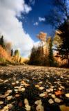 осень заволакивает листья Стоковые Изображения