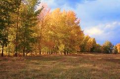 осень заволакивает солнце дождя листьев Стоковая Фотография