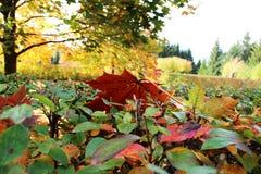осень загадочная время выполнения Все как обычно Движение в круге Зима, цветя, жизнь, вянуть стоковое фото rf