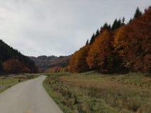 Осень здесь Стоковые Изображения