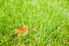 Осень - зеленая трава с желтыми лист Стоковое фото RF