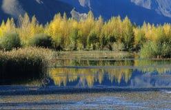осень золотистая Стоковая Фотография
