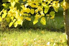 осень золотистая Стоковые Фотографии RF