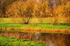 осень золотистая Стоковое Фото
