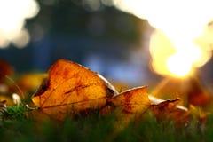 осень золотистая Стоковое Изображение RF