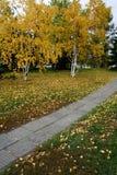 Осень золота Стоковое Изображение RF