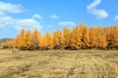 осень золотистая Стоковые Фото