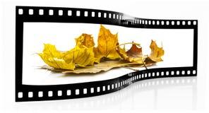 Осень листает прокладка фильма Стоковые Изображения