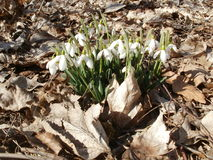 Осень и весна совместно? Стоковое фото RF