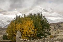 Осень и зима в Гималаях, мустанг Стоковое Фото