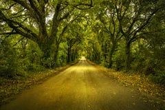 Осень или падение, дорога дерева прямая на заходе солнца Maremma, Тоскана, Стоковые Изображения RF
