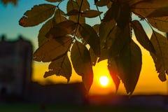Осень и падение листьев Текстура предпосылки желтых листьев листья ярких цветов ветви осени освещенные контржурным светом предпос Стоковые Фотографии RF