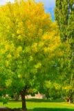 Осень и падение листьев Текстура предпосылки желтых листьев листья ярких цветов ветви осени освещенные контржурным светом предпос Стоковое Изображение RF